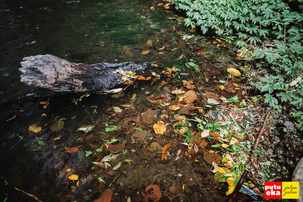 Dedaunan jatuh yang terkumpul ditepian kolam air terjun