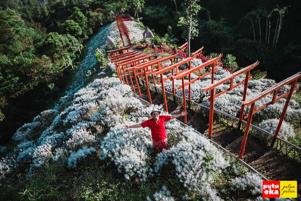 Taman Jinja Bali dengan Putu Eka Jalan Jalan berada ditengah Bunga Kasna