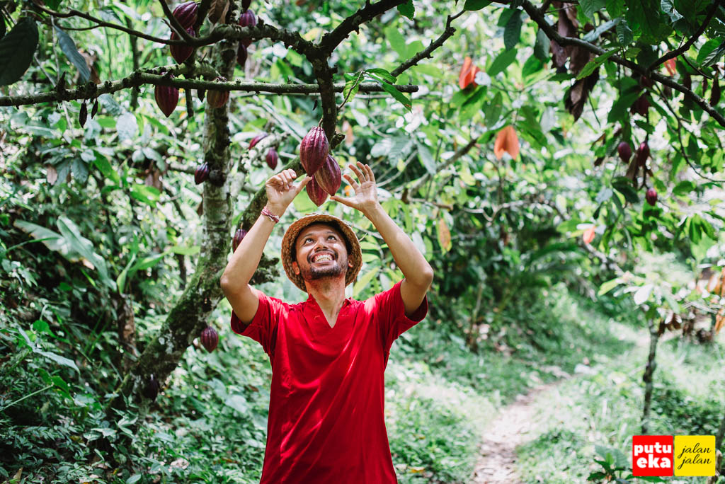 Putu Eka Jalan Jalan tersenyum gembira melihat buah Coklat yang bergantungan