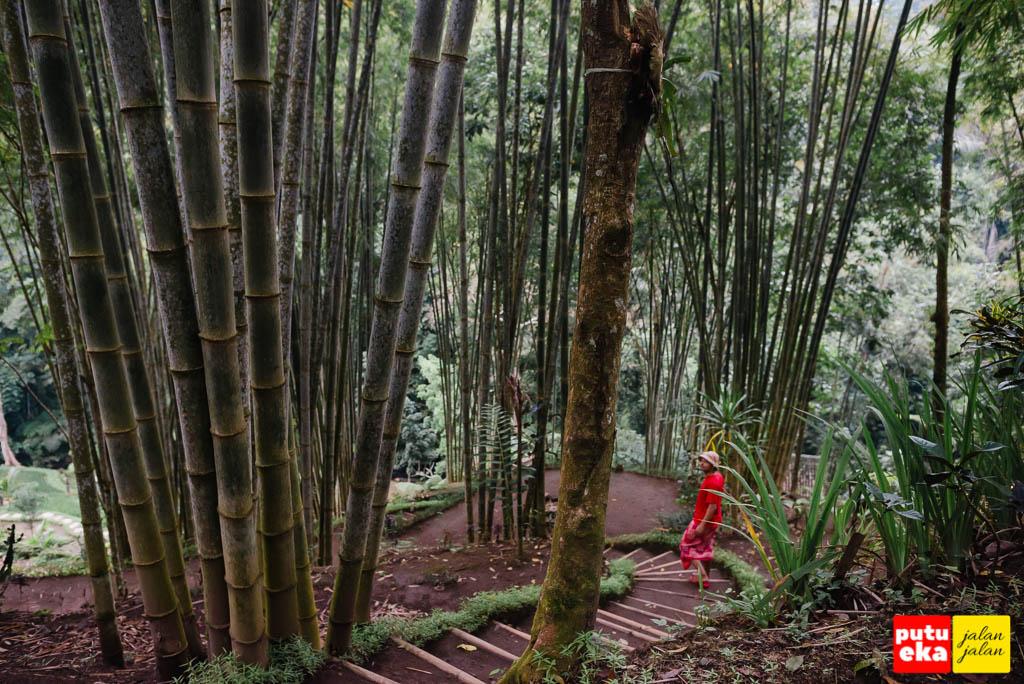 Meliuk turun diantara pohon bambu yang menjulang tinggi
