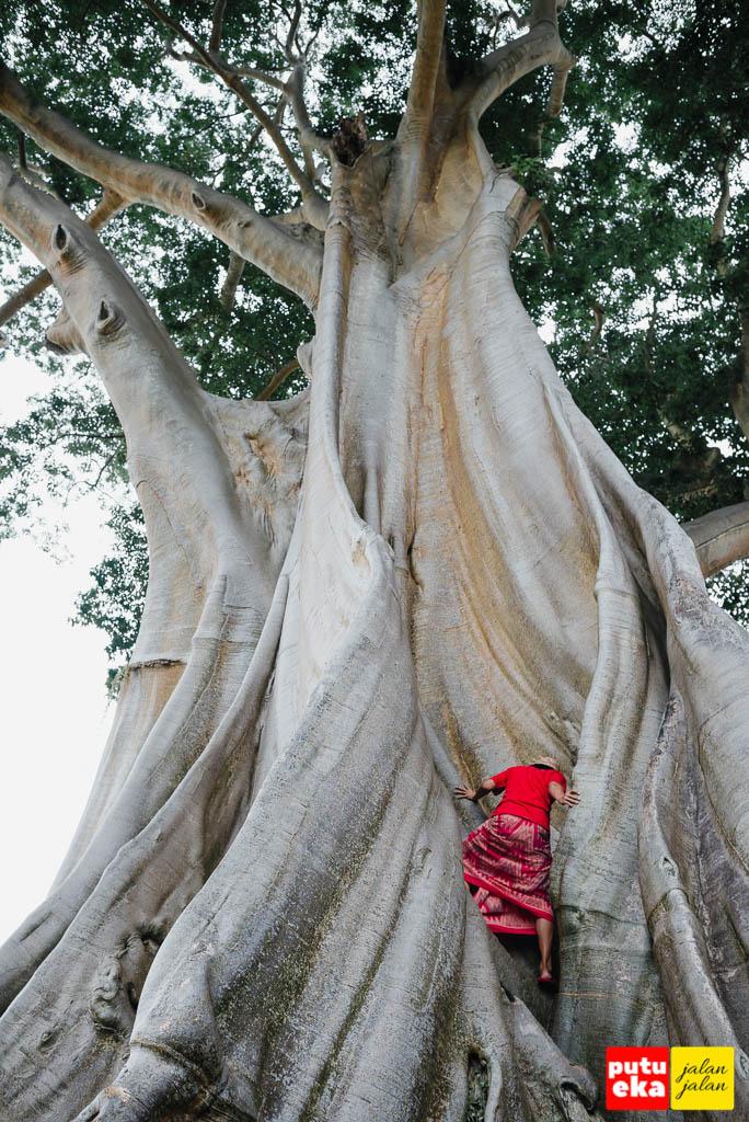 Mencoba memanjat ke cerukan pohon